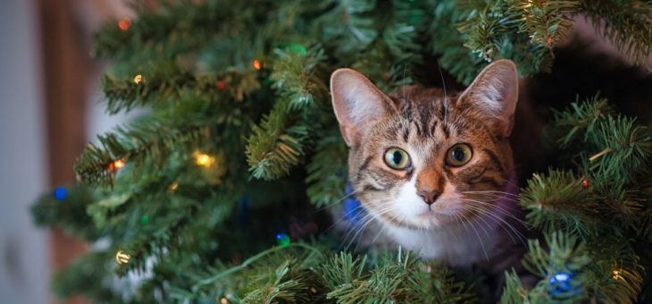 Albero di Natale vero o sintetico? Scegli il più ecologico!
